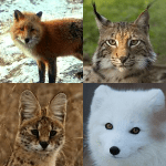 Exhibit Adoption Plan: Small Carnivores