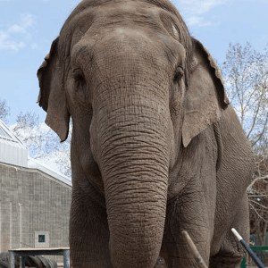 Exhibit Adoption: Lucy the Elephant