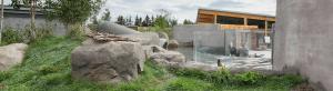 Arctic Shores: Otters