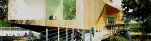 Nature's Wild Backyard: Gibbon Enclosure