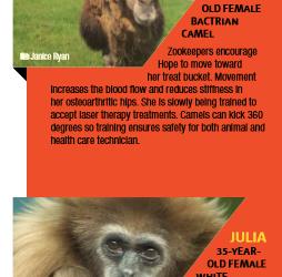 Special Care for Senior Animals