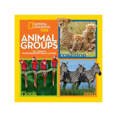 NatGeo Animal Groups