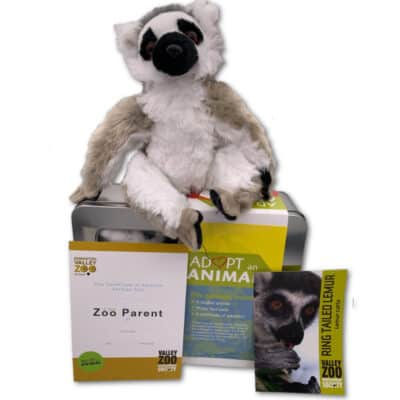 Adopt An Animal: Ring-tailed Lemur